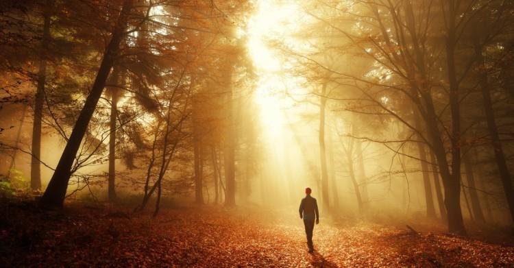 16022-man-walking-toward-sun-in-dark-autumn-forest